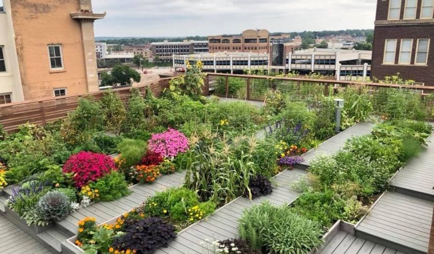 rooftop urban garden