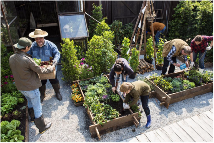 how to grow your own food in the city