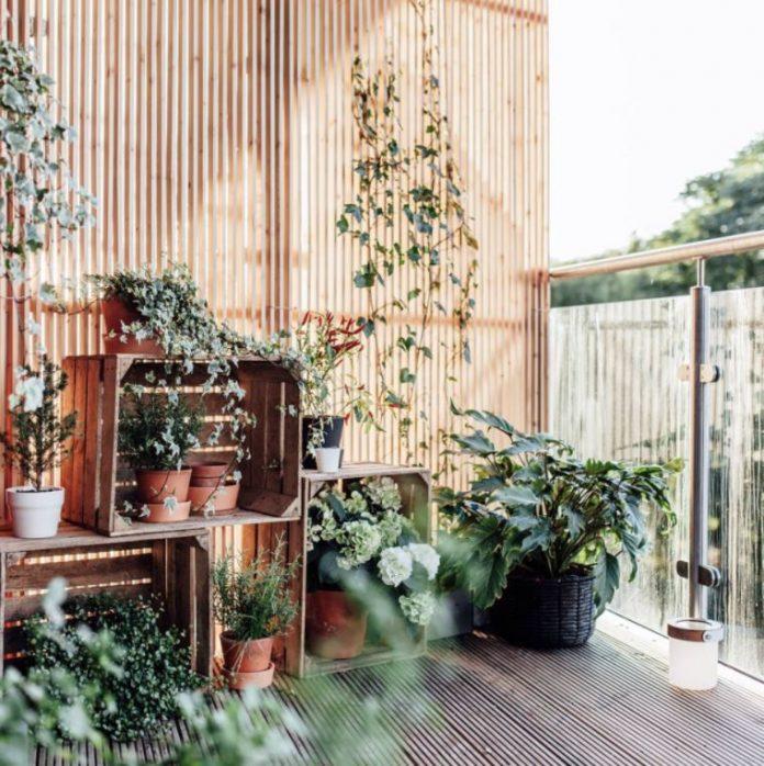 balcony plant