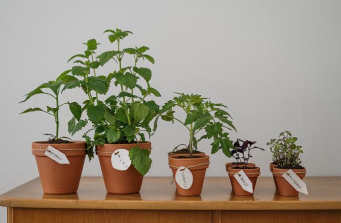 herb garden giveaway