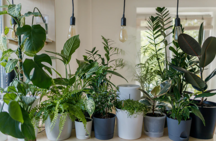 Best Plants for a Bachelor Pad